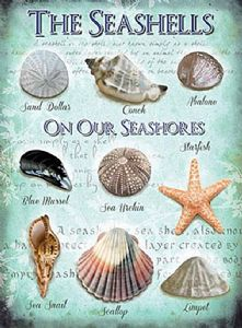 Seashells On Our Seashores small steel sign  200mm x 150mm (og)